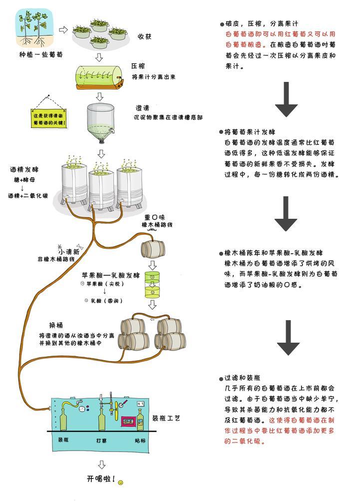 白葡萄酒酿造过程