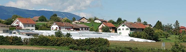 沃尔奈(Volnay)产区